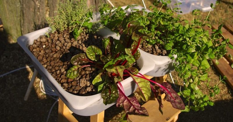 Picture of an outdoors hydroponics setup