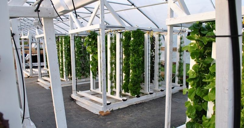 Picture of an vertical hydroponics setup