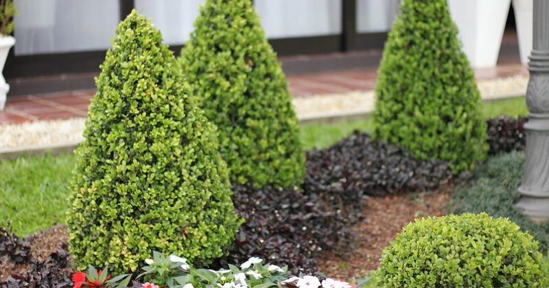 10 Best Garden Conifers To Plant At Home