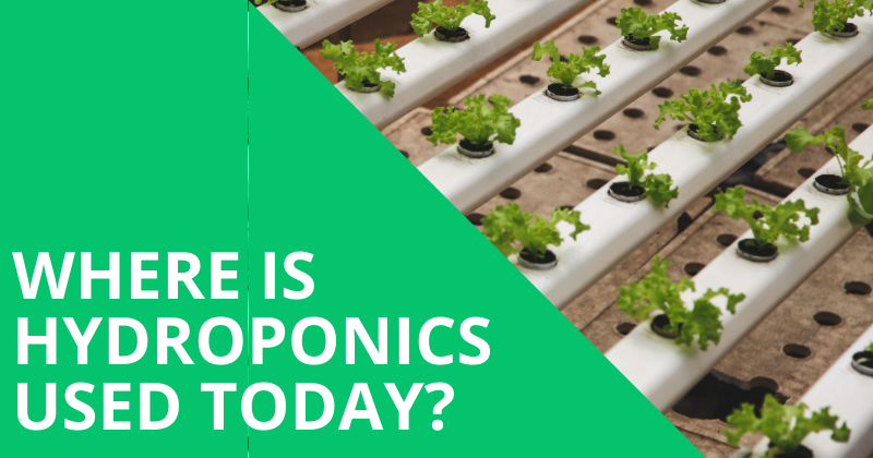 Image With Title Where is Hydroponics Used Today?