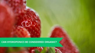 Can Hydroponics Be Considered Organic?