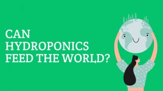 Can Hydroponics Feed The World?