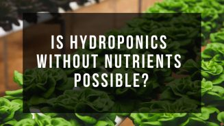 Hydroponics Without Nutrients