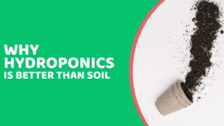7 Reasons Why Hydroponics Is Better Than Soil