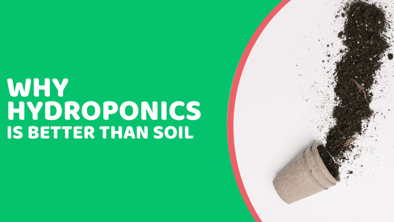 Featured image for 7 Reasons Why Hydroponics Is Better Than Soil