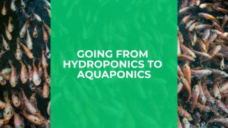 Going From Hydroponics to Aquaponics