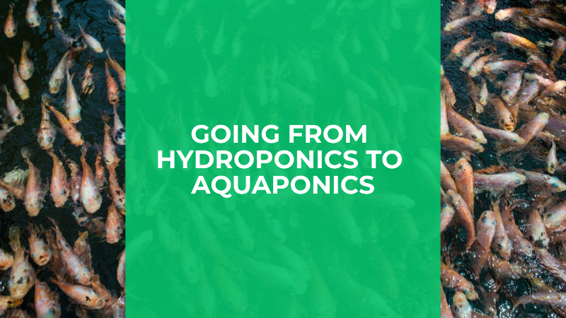 Featured image for going from hydroponics to aquaponics