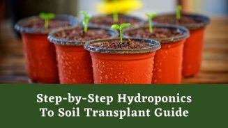 Hydroponics To Soil Transplant In 4 Easy Steps