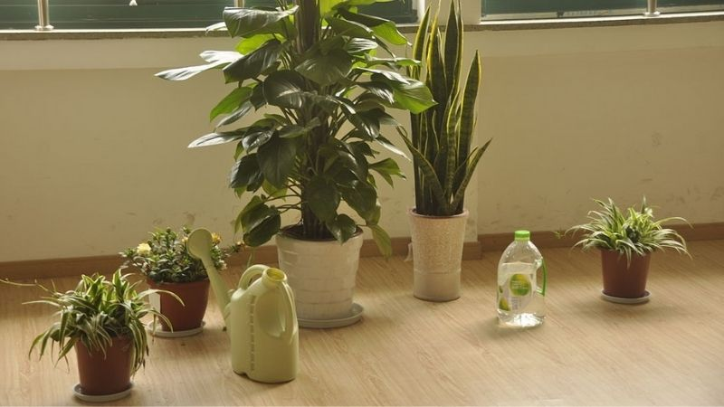 Can Indoor Plants Purify The Air In The Room